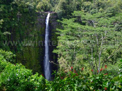 The impressive Akaka Falls, Big Island, Hawaii.